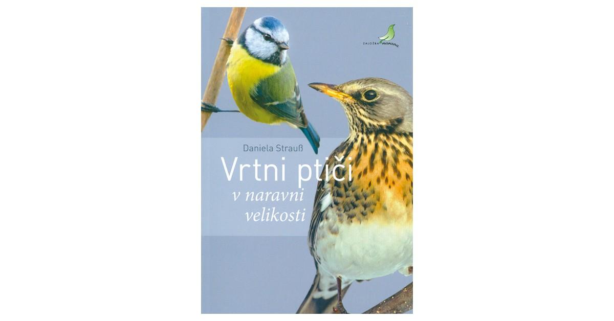 Vrtni ptiči v naravni velikosti - Daniela Strauß | Menschenrechtaufnahrung.org